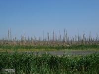 Krajobraz wokół Zalewu Szczecińskiego