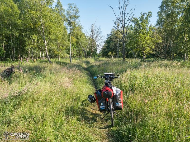 Ścieżka przez tereny bagienne za Klukami