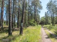 Leśny odcinek między Świnoujściem a Międzyzdrojami
