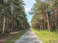 Dobra leśna droga między Pogorzelicą a Mrzeżynem