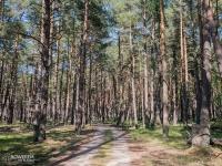 Leśny odcinek za Rowami