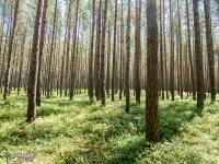Piękne lasy w okolicy Białogóry