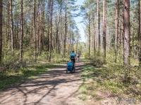 Droga leśna między jeziorem Chechło-Nakło a Świerklańcem