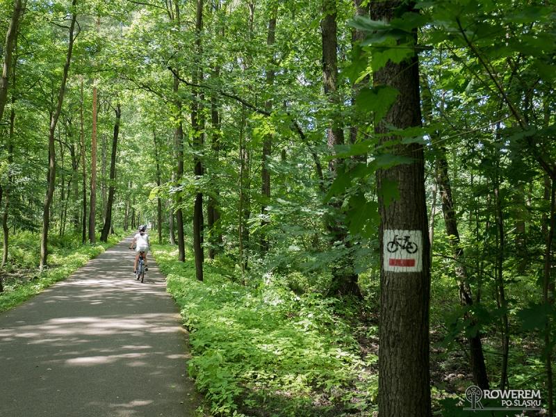 Przez Dolinę Trzech Stawów przebiega czerwony szlak rowerowy nr 1