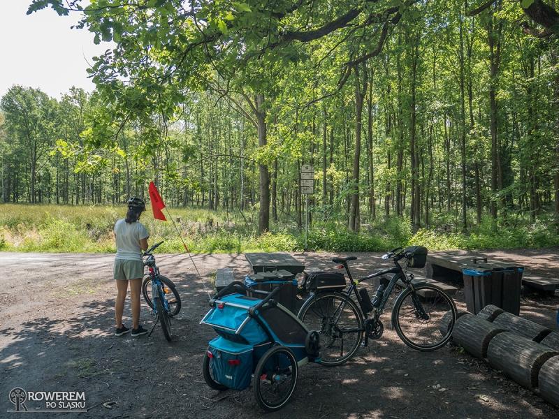 Miejsce odpoczynkowe i skrzyżowanie szlaków w lasach Murckowskich