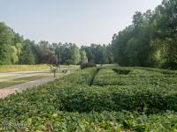 Zielony labirynt - Dolina Trzech Stawów w Katowicach