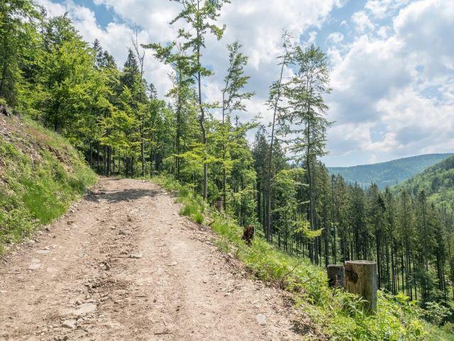 #roweremposlasku #rowerempośląsku #slaskienarowerze #slaskietravel #travel #trip #podróże #podróżemałeiduże #gory #mountains #beskidzywiecki #wyprawka #wycieczkarowerowa #wycieczkarowerowa #podjazdy #zjazdy #schroniskoprzegibek #summer #summertime #natura #naturalovers #naszapolska #polskajestpiekna #krajobrazypolskie #rowerowo #rower #bikelife